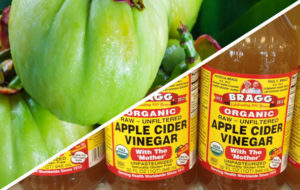 garcinia cambogia tea and apple cider vinegar